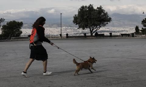 Βγάζεις βόλτα το σκύλο χωρίς λουρί; Δες τι πρόστιμο θα φας