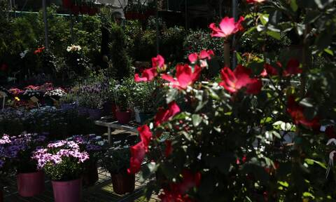 Lockdown - Ανθοπωλεία: «Μας έχουν υποσχεθεί ότι θα ανοίξουμε» για του Αγίου Βαλεντίνου