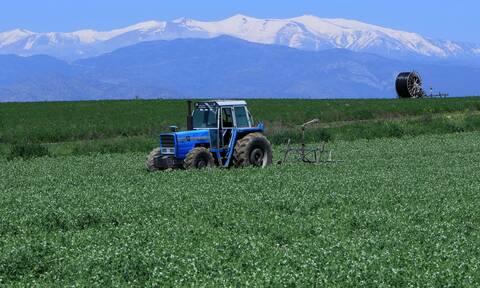 Αγρoτικά: Σε λειτουργία η υπηρεσία έκδοσης βεβαίωσης Επαγγελματία Αγρότη - Όλη η διαδικασία