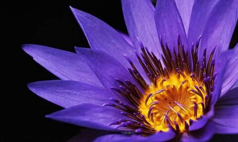 «Μυστήριο» με τη φωτογραφία μωβ λουλουδιού που προσελκύει κάθε μέρα περίπου 100.000.000 επισκέψεις