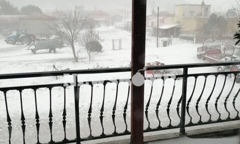 Η «Μήδεια» δεν... λυπήθηκε ούτε τον Έβρο - Χιόνια σε όλο το νομό