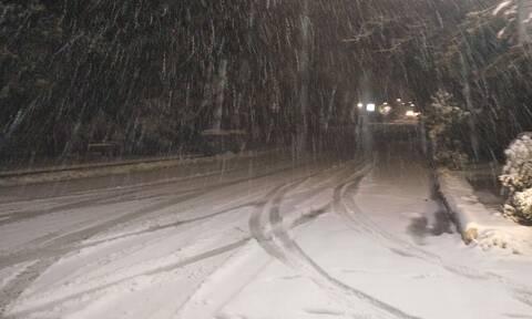 Κακοκαιρία «Μήδεια» στη Φθιώτιδα: Προβλήματα από το χιονιά - Διακοπές ρεύματος σε αρκετές περιοχές