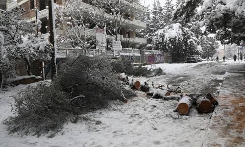 Κακοκαιρία: Κραυγή αγωνίας από τους κατοίκους των Βορείων Προαστίων - 48 ώρες χωρίς ρεύμα