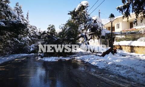 Οδοιπορικό Newsbomb.gr: Χιλιάδες νοικοκυριά στην Αττική χωρίς ρεύμα – Αγώνας δρόμου για τις βλάβες