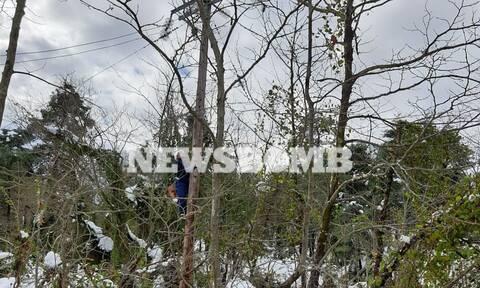 Ρεπορτάζ Newsbomb.gr: Η «μάχη» των εναεριτών του ΔΕΔΔΗΕ με το χιονιά στην Εύβοια