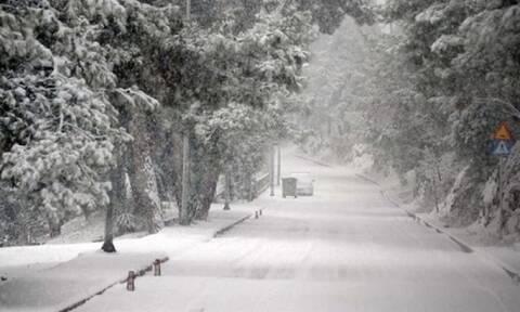 Κακοκαιρία «Μήδεια»: Γιατί έπεσαν τόσα δέντρα - Η μεγάλη διαφορά που είχε το χιόνι