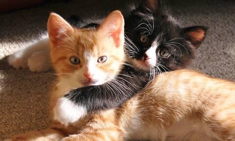 Τέσσερις απίθανες αλήθειες για τις γάτες!