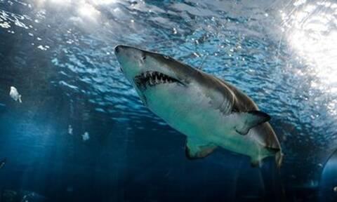 Top10: Αυτά είναι τα πιο επικίνδυνα είδη ψαριών που κατοικούν τους ωκεανούς!