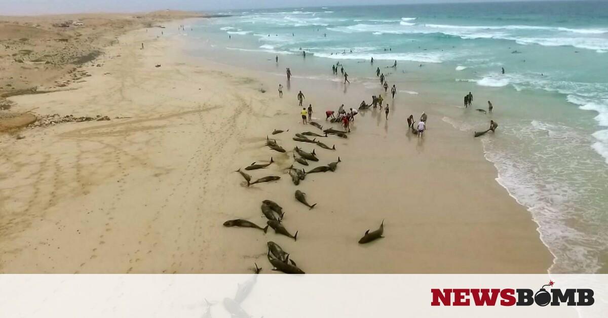Μυστήριο στη Μοζαμβίκη: 86 δελφίνια εντοπίστηκαν νεκρά – Newsbomb – Ειδησεις