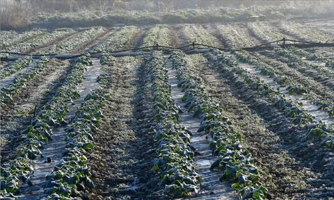 ΕΛΓΑ: Ολοκληρώθηκε η πρώτη εκτίμηση των ζημιών που προκάλεσε η «Μήδεια» σε καλλιέργειες