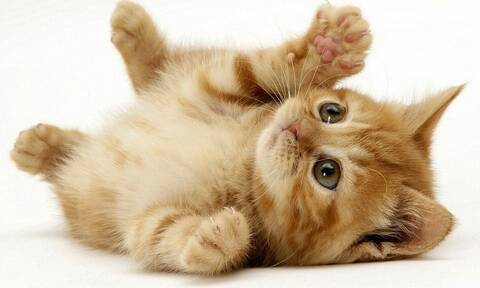 Γάτες: Τι ονόματα πρέπει να τους δώσεις για να σε ακούνε