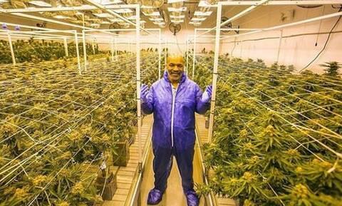 Μάικ Τάισον: Πλουτίζει πουλώντας μαριχουάνα – Κερδίζει 500.000 δολάρια το μήνα!