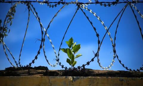 Όσα περισσότερα φυτά έχει μία φυλακή, τόσο χαμηλότερα τα επίπεδα βίας