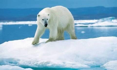 Νορβηγία: Πολική αρκούδα επιτέθηκε και τραυμάτισε άντρα