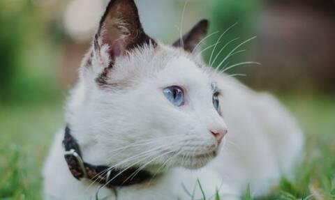 Γάτες: Επιτέλους λύθηκε το μεγάλο μυστήριο