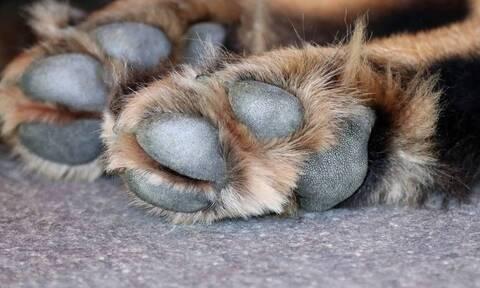 Αγρίνιο: Βασάνισαν και σκότωσαν αδέσποτη σκυλίτσα - Παρέμβαση του αρχηγού της ΕΛΑΣ