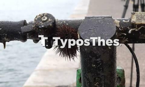 Θεσσαλονίκη: Η άμπωτη «έβγαλε» πατίνια στο Θερμαϊκό (pics & vid)