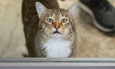 Αυτή είναι η περίφημη γάτα δραπέτης - Κάνει εξέγερση μέσα στο ίδρυμά της