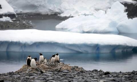 Κορονοϊός: Τα εμβόλια «έφθασαν» στην Ανταρκτική