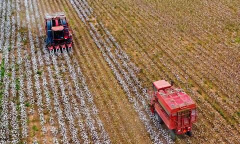 Μέχρι 25 Μαρτίου η καταβολή 248 εκατ. ευρώ για συνδεδεμένες και ειδική ενίσχυση βάμβακος