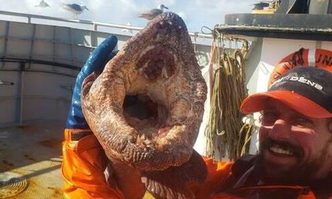 Απίστευτο: Ψαράδες έβγαλαν «τέρας» από το βυθό - Σκοτώνει με ένα δάγκωμα