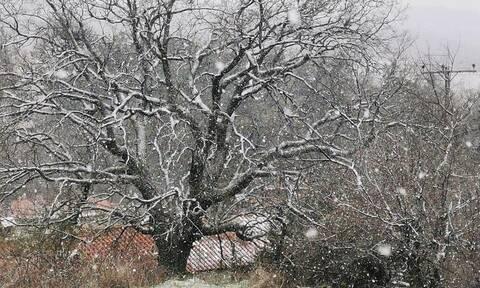 ΤΩΡΑ: Χιονίζει στα ορεινά της Θεσσαλονίκης