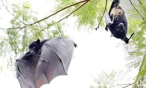 Νυχτερίδες, παγκολίνοι, χοίροι, πτηνά: Ποια θα είναι η επόμενη πανδημία;