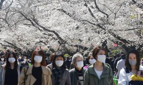 Ιαπωνία: Οι κερασιές άνθισαν στη σκιά της πανδημίας - Μοναδικές εικόνες