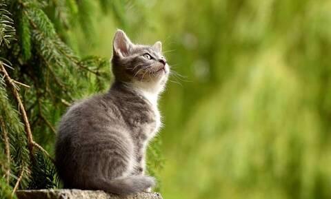 Ρωσία: Έτοιμο το πρώτο εμβόλιο για ζώα κατά του κορονοϊού