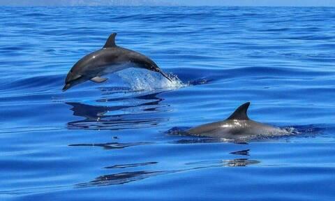 Θεσσαλονίκη: Δελφίνια βγήκαν στον ...Θερμαϊκό