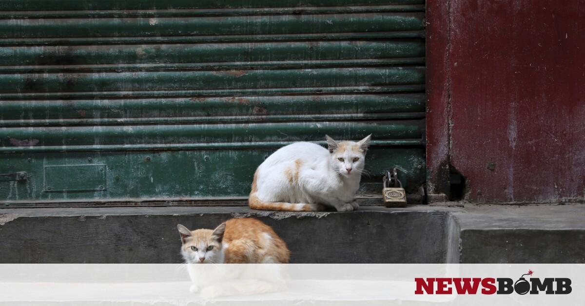 facebookcats