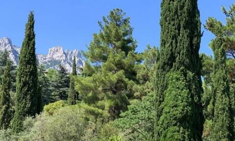 Βρες ποιο δέντρο αντιστοιχεί στο μήνα που γεννήθηκες και μάθε τι σημαίνει