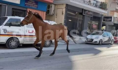 Λάρισα: «Σούζα τ' αλογάκι» στην πραγματικότητα – Έκοβε βόλτες στην πόλη μέχρι να το σταματήσουν