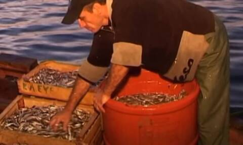 Αιτωλοακαρνανία: Σήκωσαν τα δίχτυα και δεν πίστευαν στα μάτια τους – Η απίστευτη ψαριά