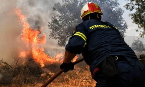 Φωτιά ΤΩΡΑ: Μεγάλη πυρκαγιά στη Βόρεια Εύβοια