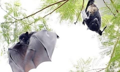 Νυχτερίδες, παγκολίνοι, κουνάβια και άλλα: Αυτά είναι τα ζώα που μεταδίδουν ιούς στους ανθρώπους