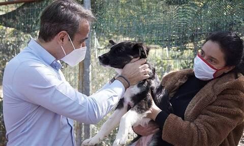 Παγκόσμια ημέρα αδέσποτων ζώων: Το καταφύγιο της Ηλιούπολης επισκέφθηκε ο Μητσοτάκης