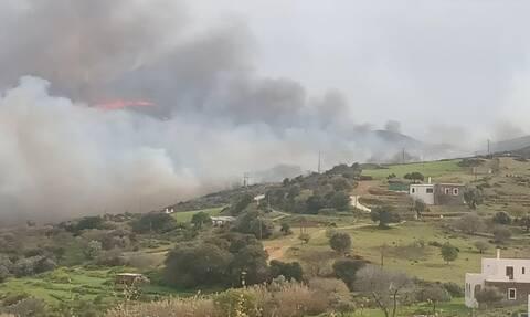 Φωτιά Άνδρος: Κάηκαν περισσότερα από 10.000 στρέμματα – Σε ύφεση το πύρινο μέτωπο