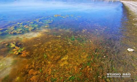 Αργολίδα: Παραλία βάφτηκε κόκκινη - Απίστευτες εικόνες (pics)