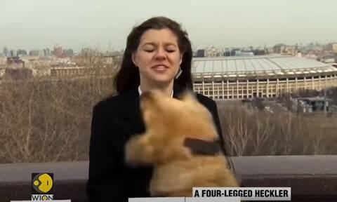 Έγινε και αυτό: Σκύλος κλέβει το μικρόφωνο από δημοσιογράφο στον «αέρα» και γίνεται viral