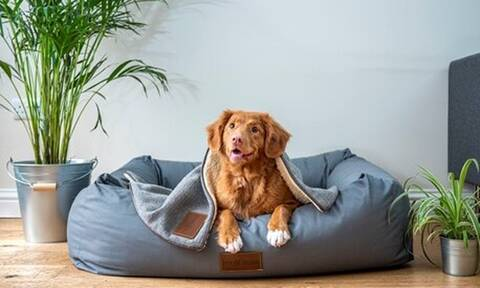 Top10: Δέκα ανησυχητικά «σημάδια» στη συμπεριφορά του σκύλου σας