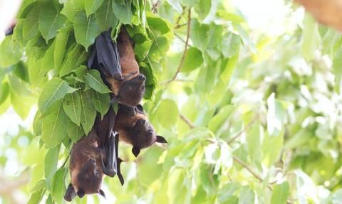 Παγκόσμια ανησυχία: Εντοπίστηκε θανατηφόρος ιός από νυχτερίδες σε σπηλιά της Αυστραλίας