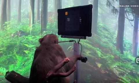 Στο σύμπαν του Έλον Μασκ: Μαϊμού…παίζει βιντεοπαιχνίδια με το μυαλό της
