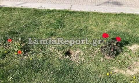 Λαμία: Την έπιασαν να κλέβει λουλούδια και την έβαλαν να τα φυτέψει ξανά (pics)