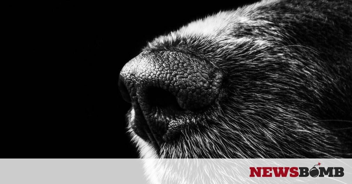 facebookdog1