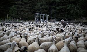 Πάσχα 2021: Λήψη μέτρων για την αποφυγή «ελληνοποιήσεων» σε αμνοερίφια και αυγά