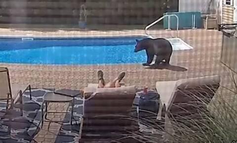 Κοιμόταν αμέριμνος δίπλα από την πισίνα και ξαφνικά είδε αυτό