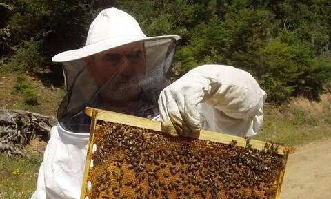 Σε λειτουργία η πλατφόρμα του Εθνικού Ηλεκτρονικού Μελισσοκομικού Μητρώου