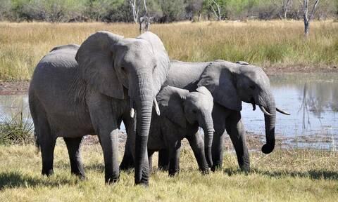 Ελέφαντες Αφρική