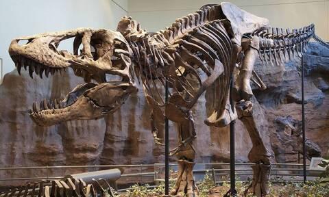 Νέες ενδείξεις: Ομαδική υπόθεση για τους τυραννόσαυρους το κυνήγι της τροφής
